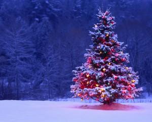 Illuminated Christmas Tree Outdoors